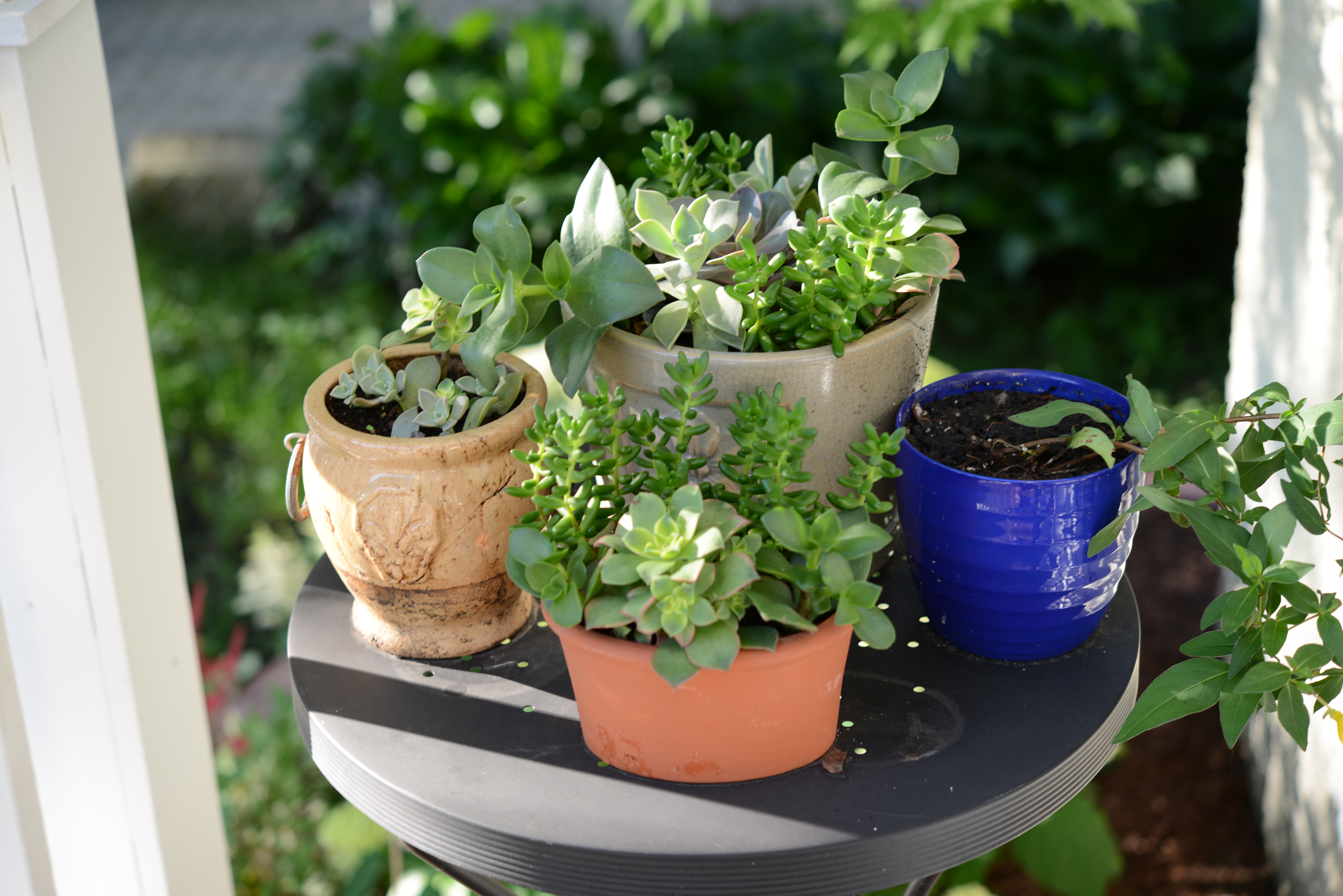 Simple gardening tips regrowing succulents the simple for How to keep succulents alive indoors